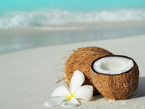 ココナッツと海.jpg