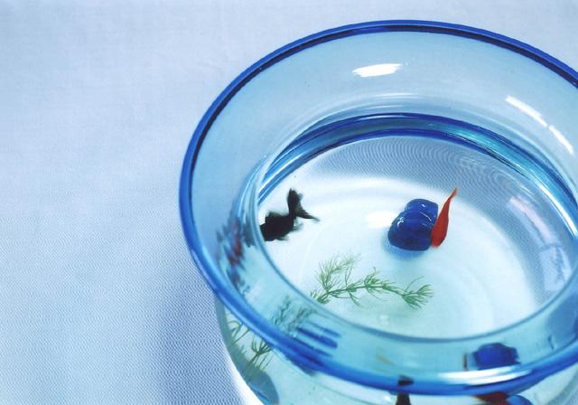 金魚鉢.jpg