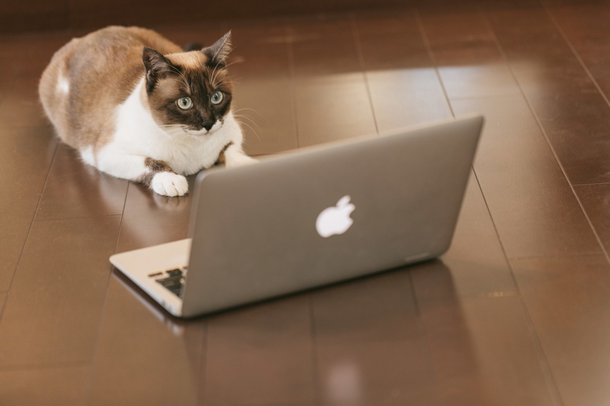 仕事の効率 パソコン 猫